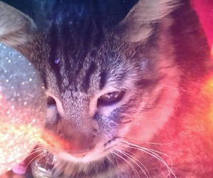 cat, gatito, and gato image