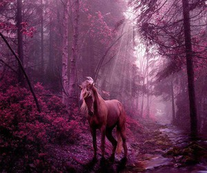 horse and pink image