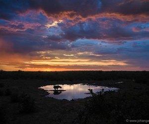 rhino and sunset image