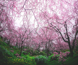 tree, blossom, and nature image