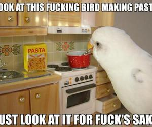 bird, cooking, and food image