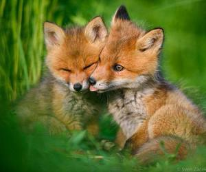 baby animals, cub, and cute animals image