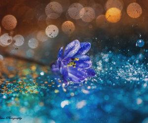 beautiful, flower, and macro image