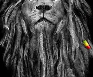 lion, rasta, and reggae image