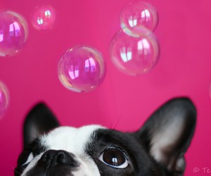dog, pink, and bubbles image