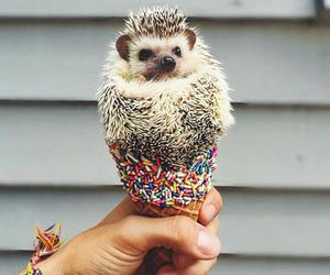 animal, cute, and ice cream image