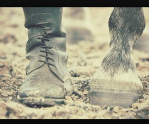 horse, equestrian, and hooves image