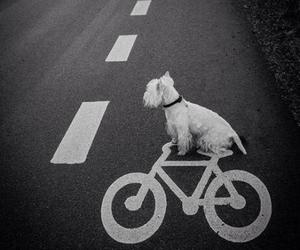 dog, bike, and street image