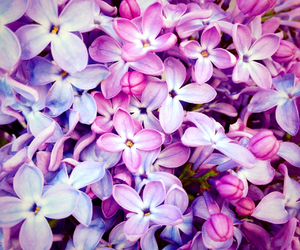 flowers, inspiration, and pink image