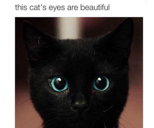 cat, eyes, and beautiful image