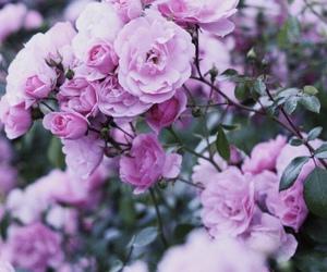 flowers, lockscreen, and pink image