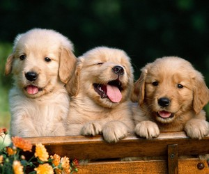 cachorros, dogs, and cutte image