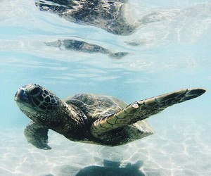 turtle, animal, and ocean image