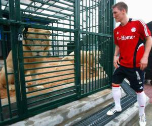 germany, allianz arena, and lion image
