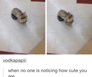 funny, tumblr, and cute image