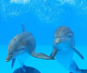 dolphin, animals, and sea image