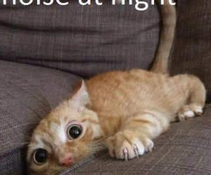 cat, funny, and night image