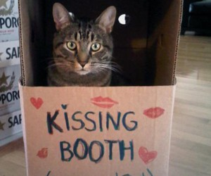 cat, we heart it, and cute image