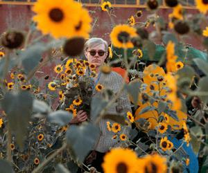 andy worhol, cute, and sunflowers image