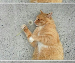 cat, dandelion, and funny image