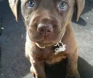 dog, cute, and eyes image