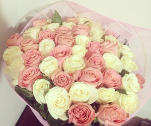blanco, h, and rosas image