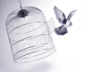 bird, freedom, and cage image
