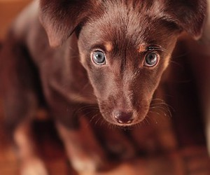 eyes and puppy image