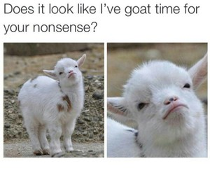 funny and goat image