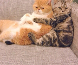 cats, funny cat, and kawaii cat image