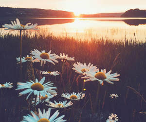 adventures, flower, and lake image