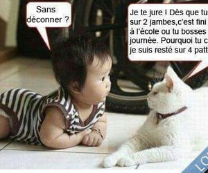 cat, baby, and funny image