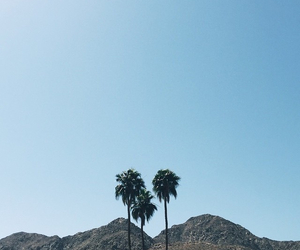 california, los angeles, and palms image