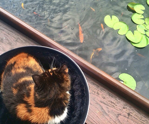 adorable, bicolor, and fishies image