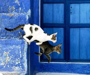 blue, cats, and summer image