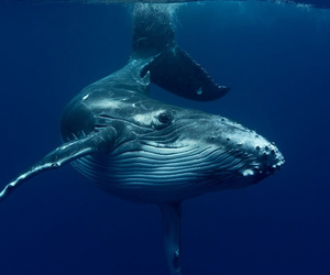 blue and whale image