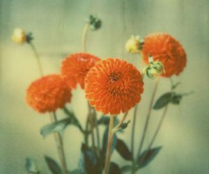 flowers, green, and grunge image