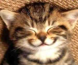cat, smile, and kitten image