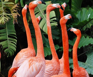flamingo, pink, and tropical image