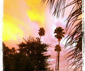 california, palms, and los angeles image