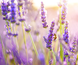 flowers, purple, and bee image