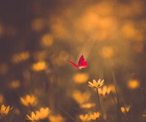 amarillo, bokeh, and flower image