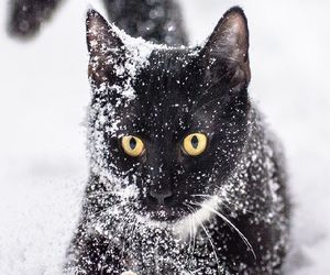 animal, cat, and winter image
