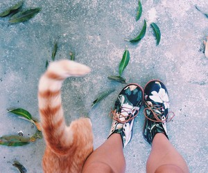 cat, cool, and girl image