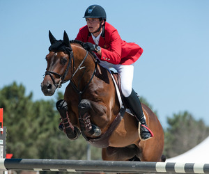 bay, equestrian, and show jumping image