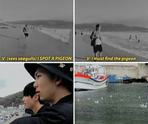 funny, kpop, and seagulls image