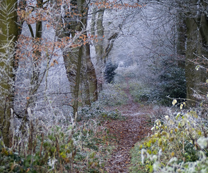blue, forest, and frost image