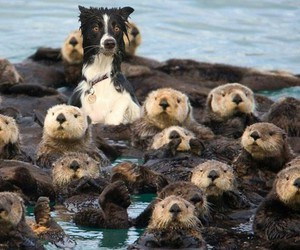 dog, otter, and animal image