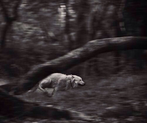 wolf, run, and black and white image
