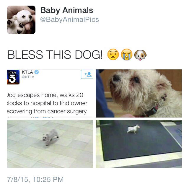 dog, puppy, and tweet image